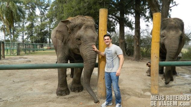 Elefante fazendo pose