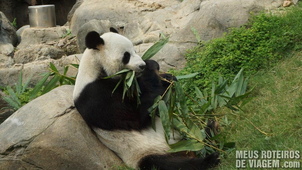 Urso Panda no Ocean Park - Hong Kong