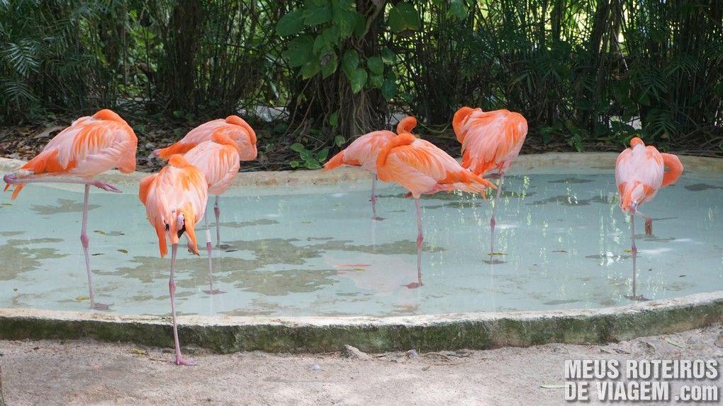 Parque Xcaret - México