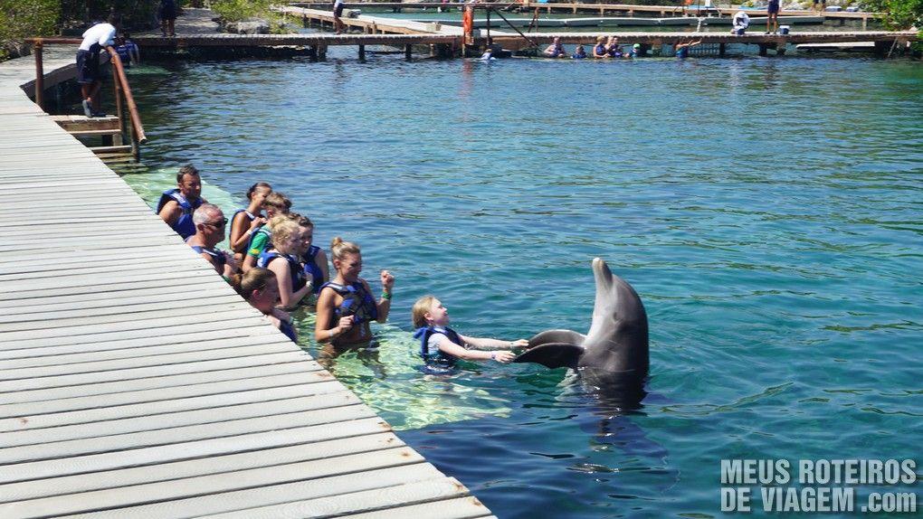 Atividade com golfinhos no Parque Xel-Há - Cancun, México