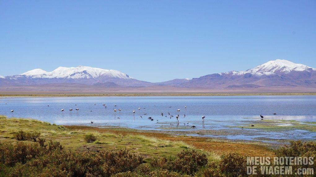 Flamingos no Salar de Tara - Agência Araya Atacama
