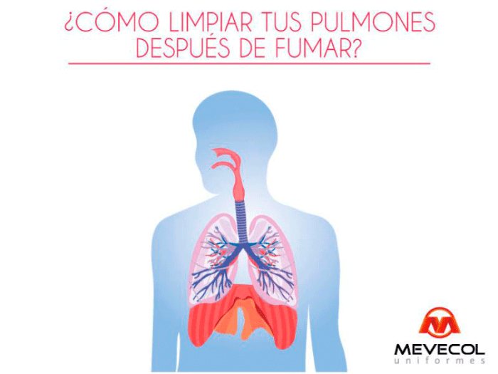Cómo limpiar tus pulmones después de fumar