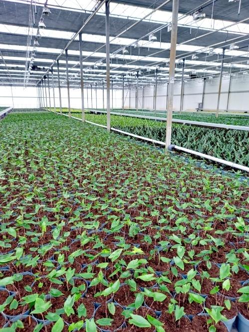kamerplanten kwekerij