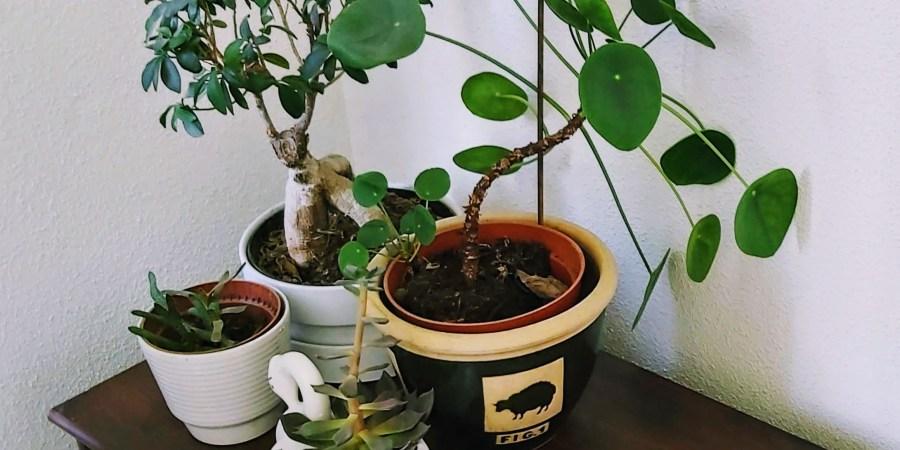 4 planten in pot, netjes bij elkaar