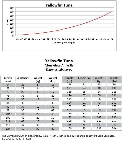 089 - Yellowfin Tuna