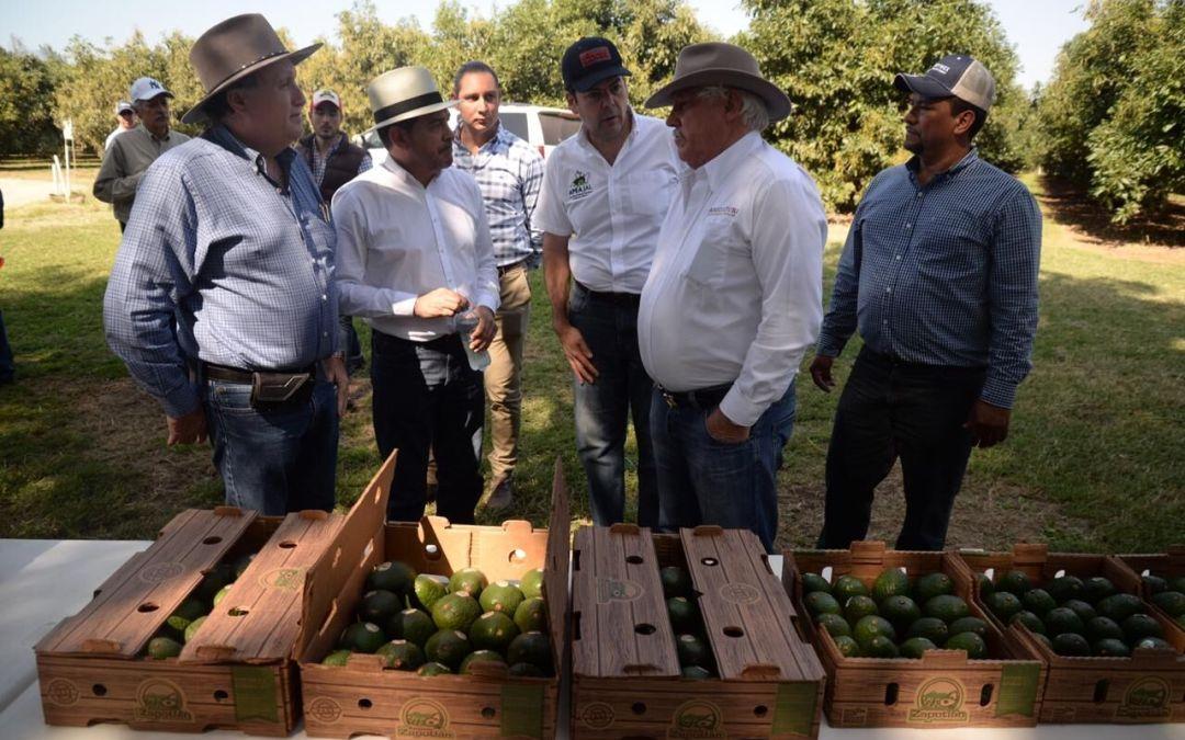 Replicarán proyectos productivos agrícolas exitosos en  sur-sureste