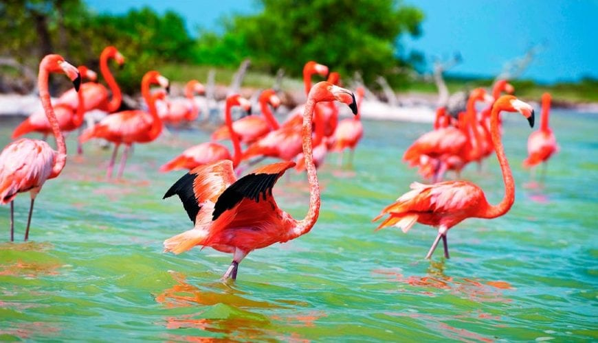 SAT Mexico tour and travel visit celestun