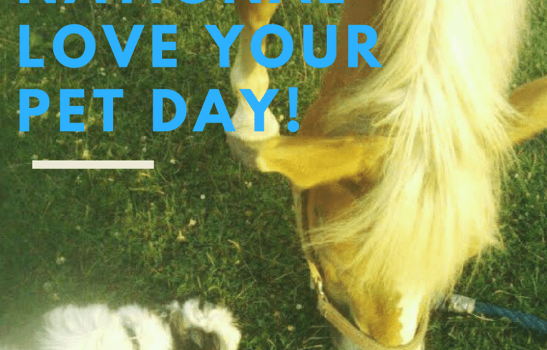National Love Your Pet Day- Which Dog Breed is best for you?