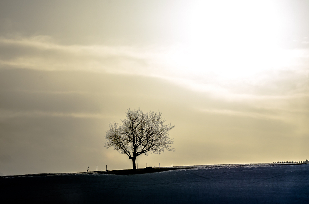 Lonesome tree @germanvision @artofvisuals @haubersalpenresort @oberstaufen_allgaeu