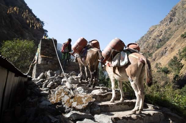 Nepal trekking (116)