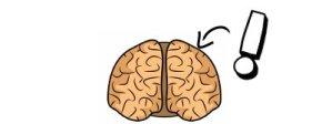 Visual Spatial Brain