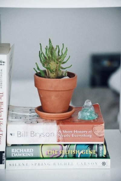 Cactus bookshelf styling