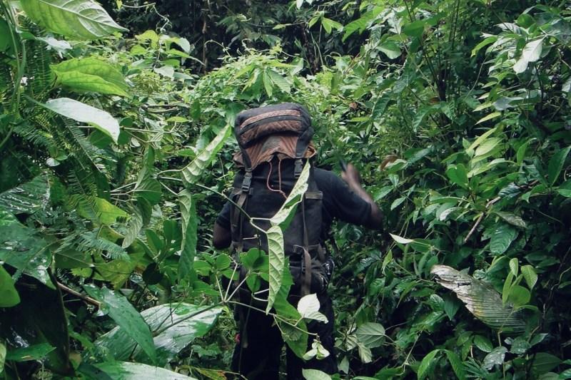 Boreno Rainforest