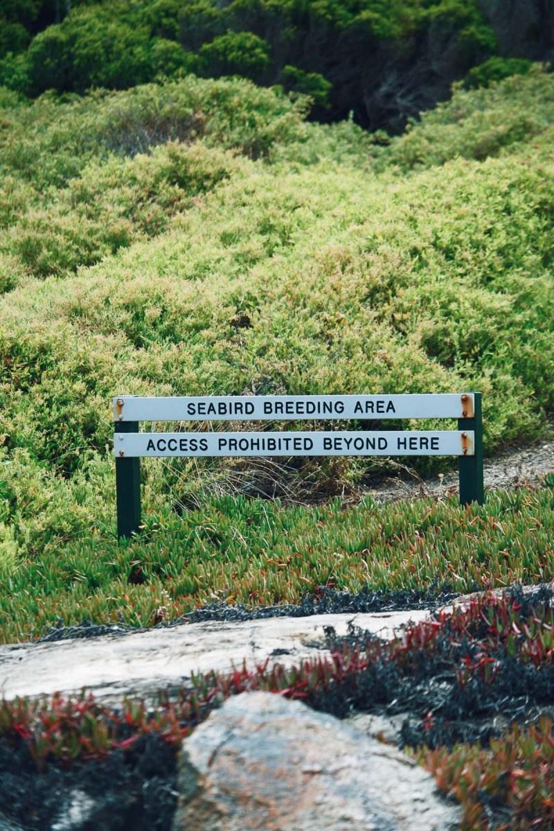 Woody Island Seabird Breeding