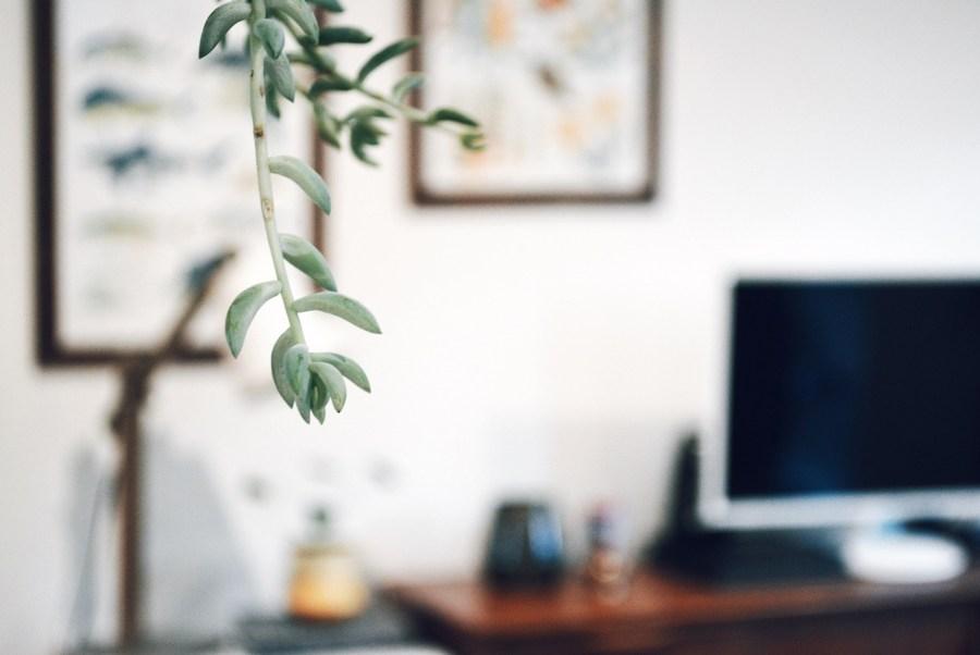 Mid century living room plants