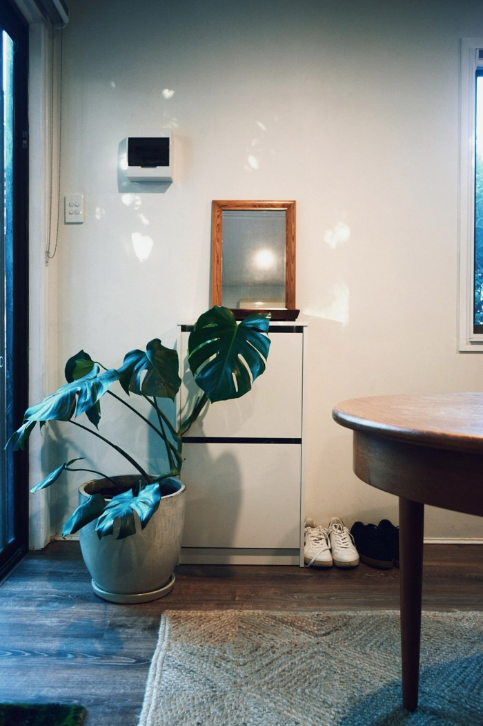Compact Eco Home Perth Monstera