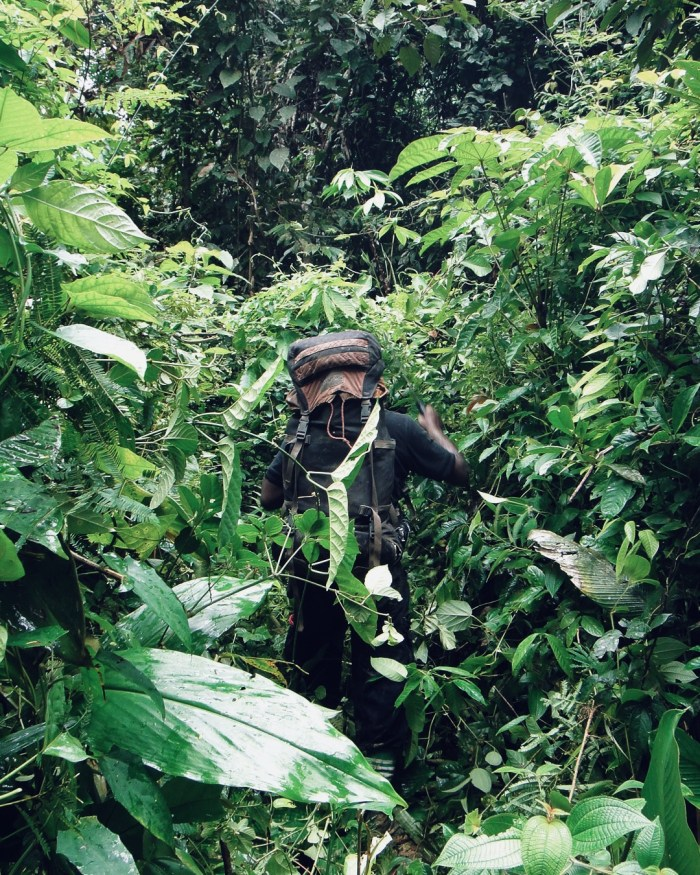 Borneo Rainforest Hiking
