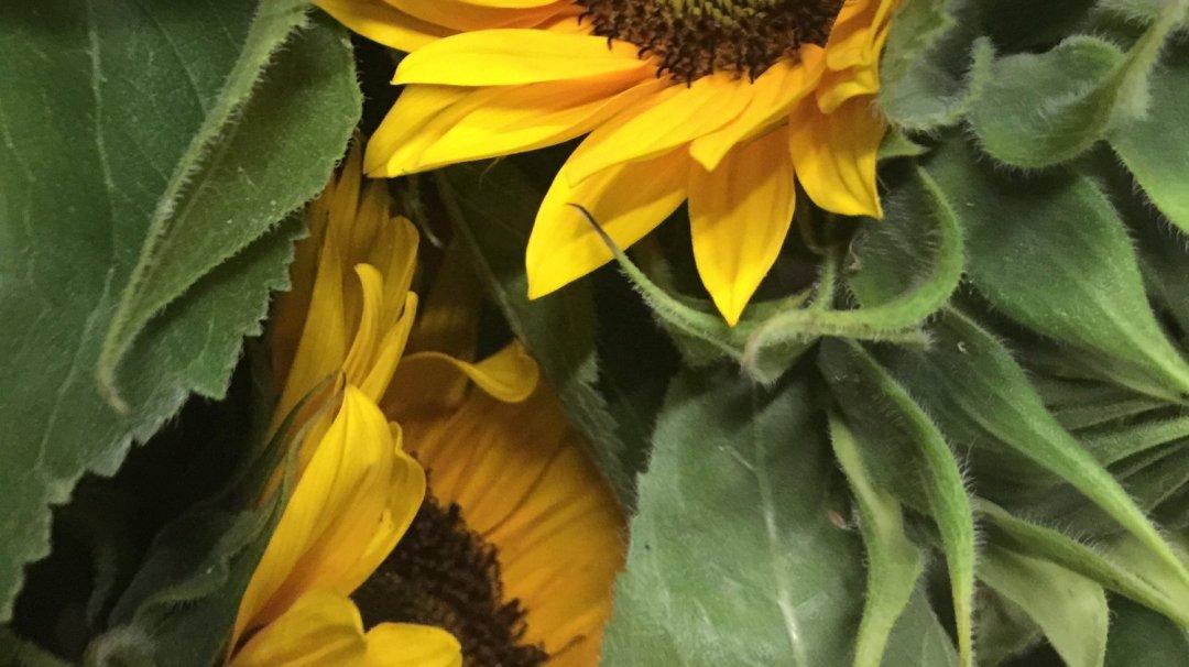 Mettre ses sens en éveil avec les fleurs VendéeFleurs Hocbon Ludovic (36)