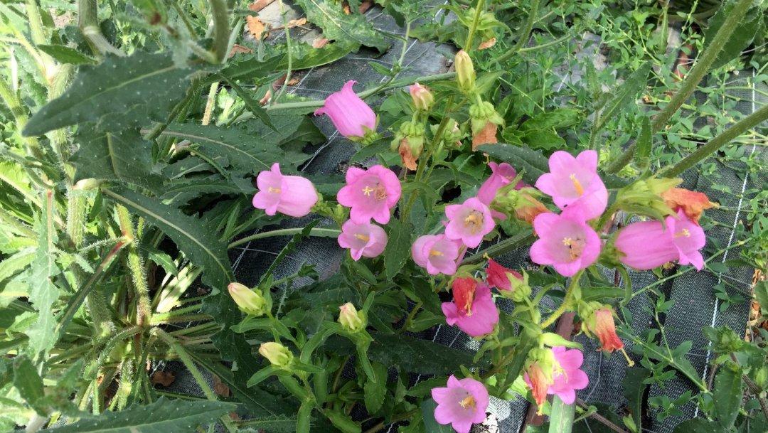 Mettre ses sens en éveil avec les fleurs VendéeFleurs Hocbon Ludovic (8)