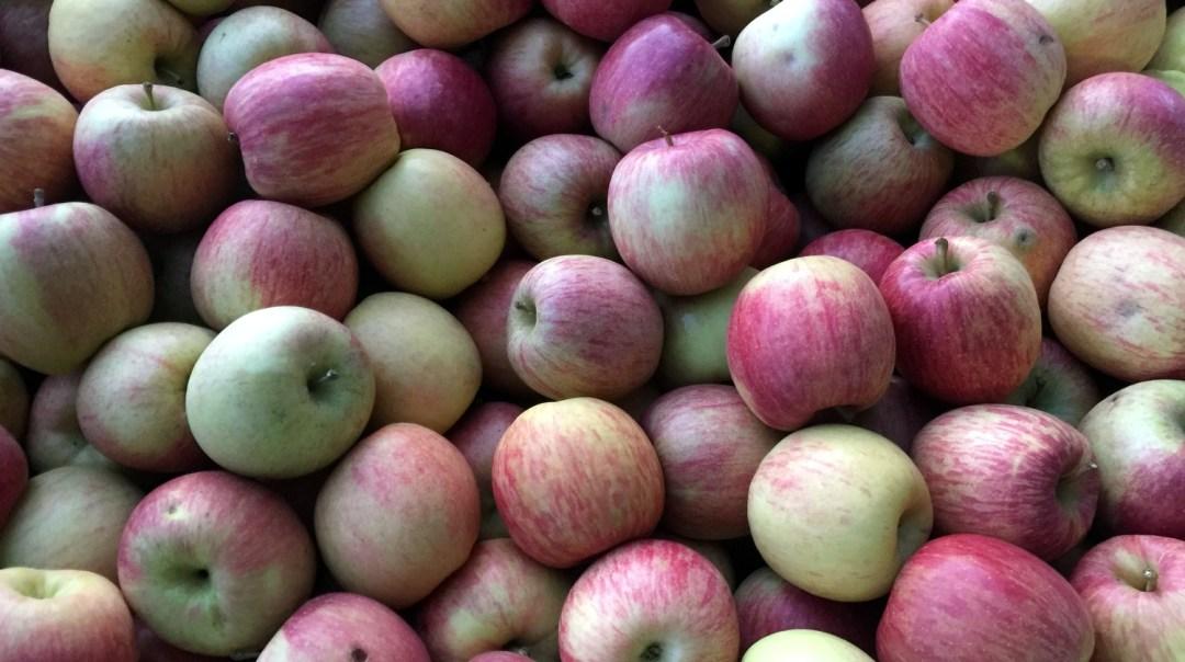 jus de pommes pour Voyage d'Etudes 201 2018 CFA MFR Puy-Sec (3)