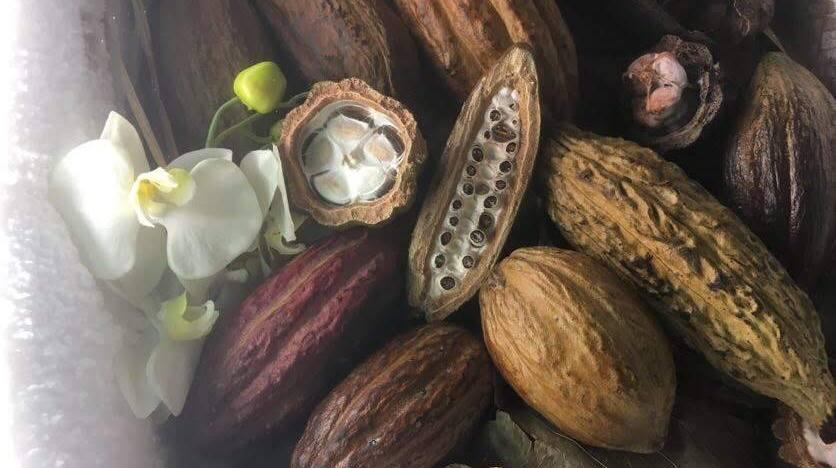 Chocolat VE Pays Basque 2018 (5)