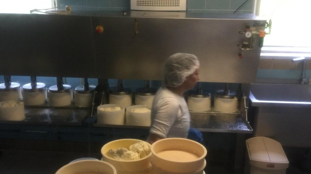 La Ferme de Bellonte Fabrication de fromage Saint-Nectaire (26)