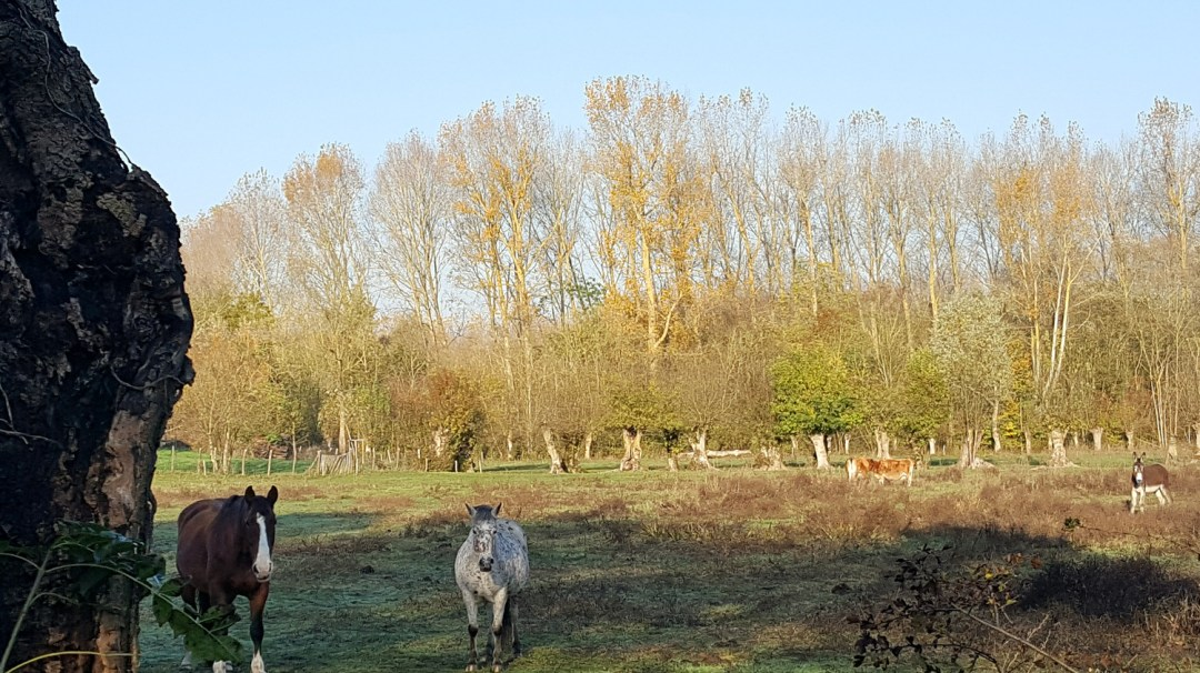 Ecurie du Marais Parc du Marais Poitevin novembre 2018 Maraîchins (8)
