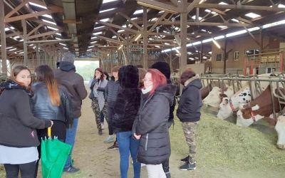 Produire, transformer et vendre son lait de vaches
