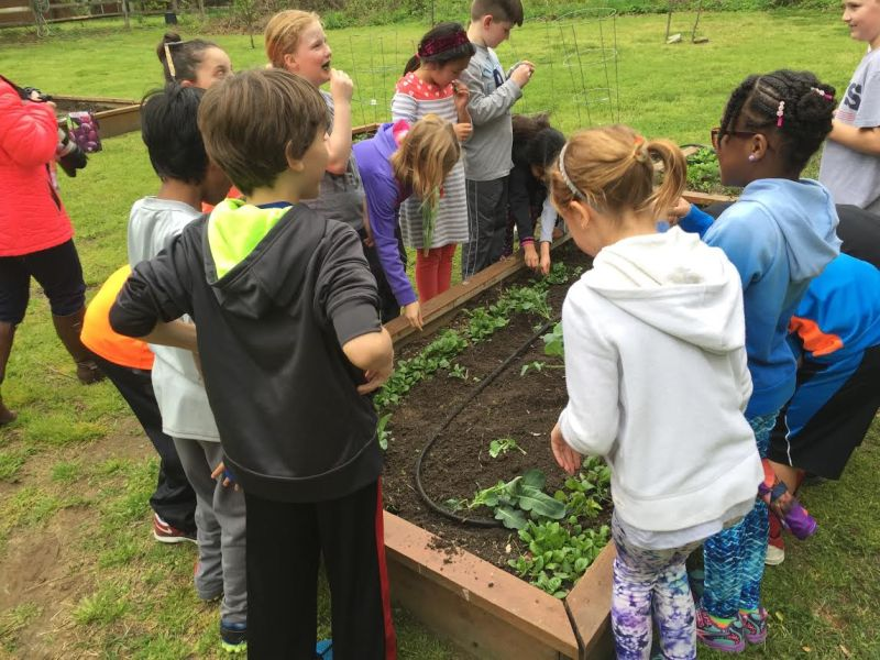 Third grade students sample vegetables fresh from the garden.