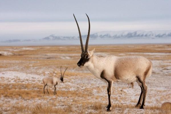 الحيوانات البرية المهددة بالانقراض في السنوات القادمة