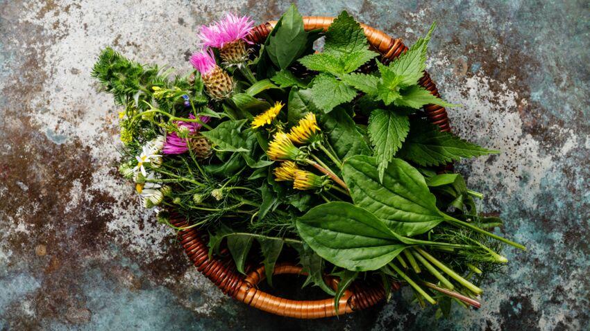 مجموعه نباتات برية ولذيذة مميزة للصيف