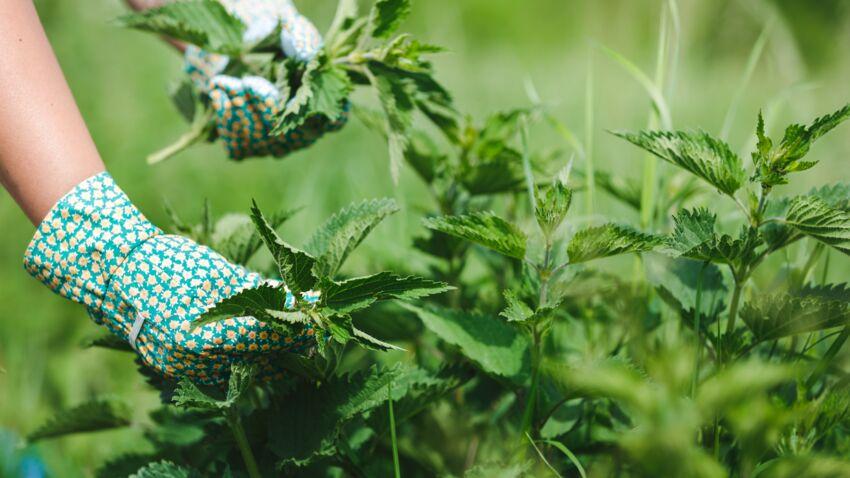 مجموعه طرق لعلاج لسعات نبات القراص