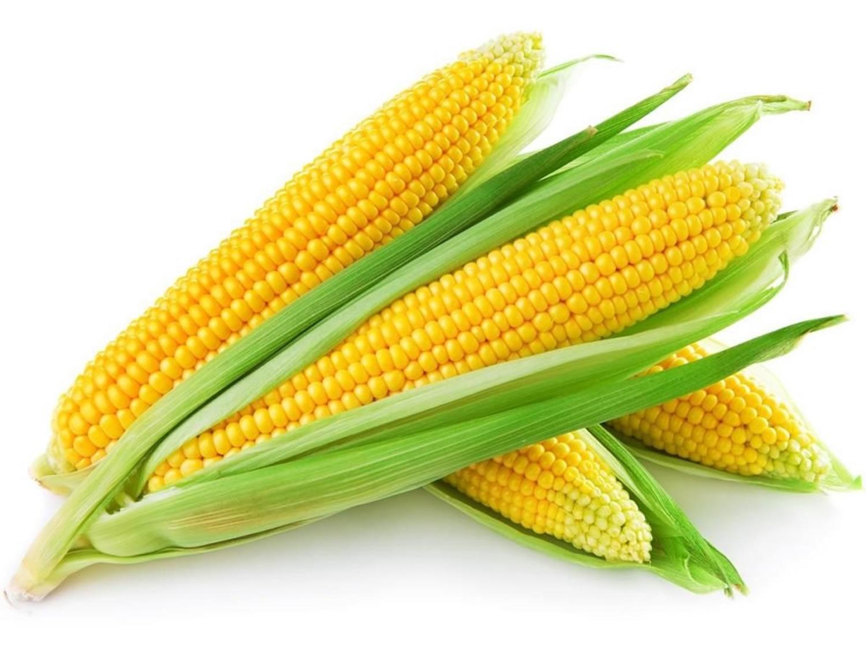 معلومات عن الذرة الحلوة
