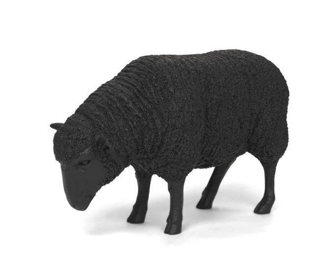 Black Sheep Hi Res