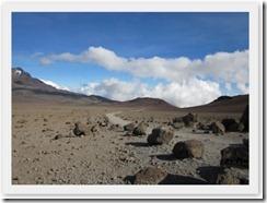 Kilimanjaro (52)