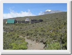 Kilimanjaro (54)