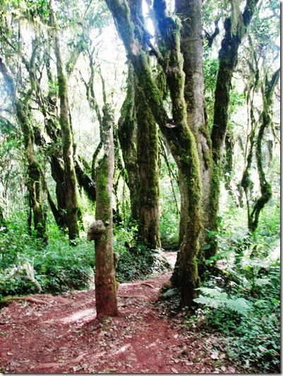 Kilimanjaro Plant Life (16)