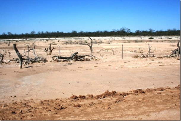 2008_08_31 Paraguay Chaco (59)