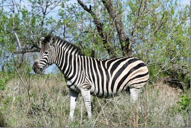 2009_11_23 South Africa Kruger