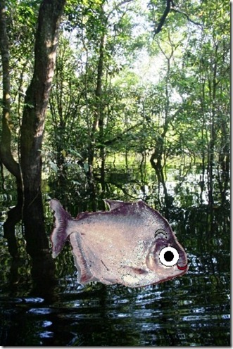 page 14 - piranha