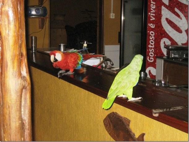 2008_07_17 Brazil Amazon Resort (18)