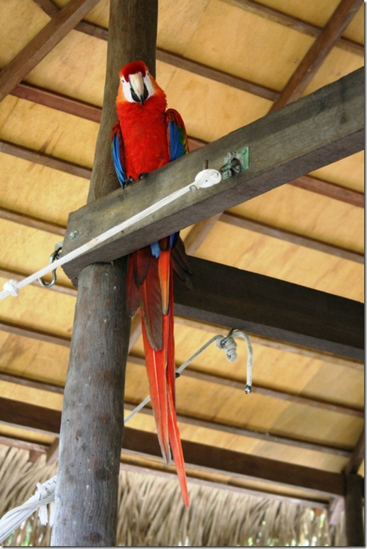 2008_07_17 Brazil Amazon Resort