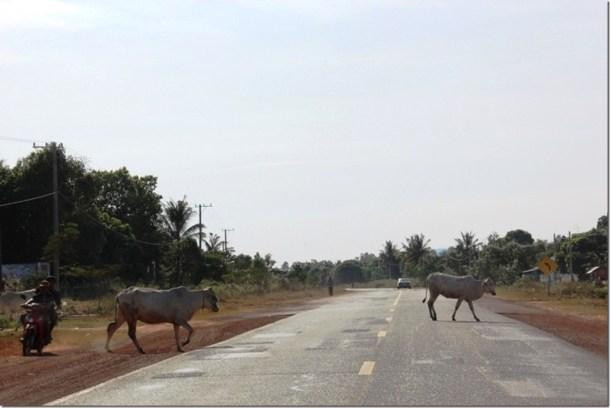 2012_12_31 Cambodia Hwy 4 (6)