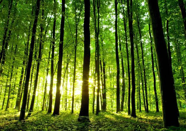 MGFTools a tutela del patrimonio forestale