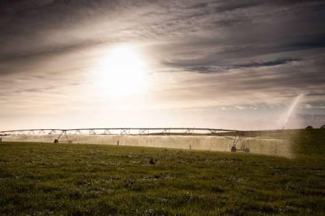 mgi-irrigation-16