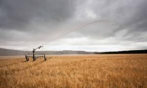 mgi-irrigation-51