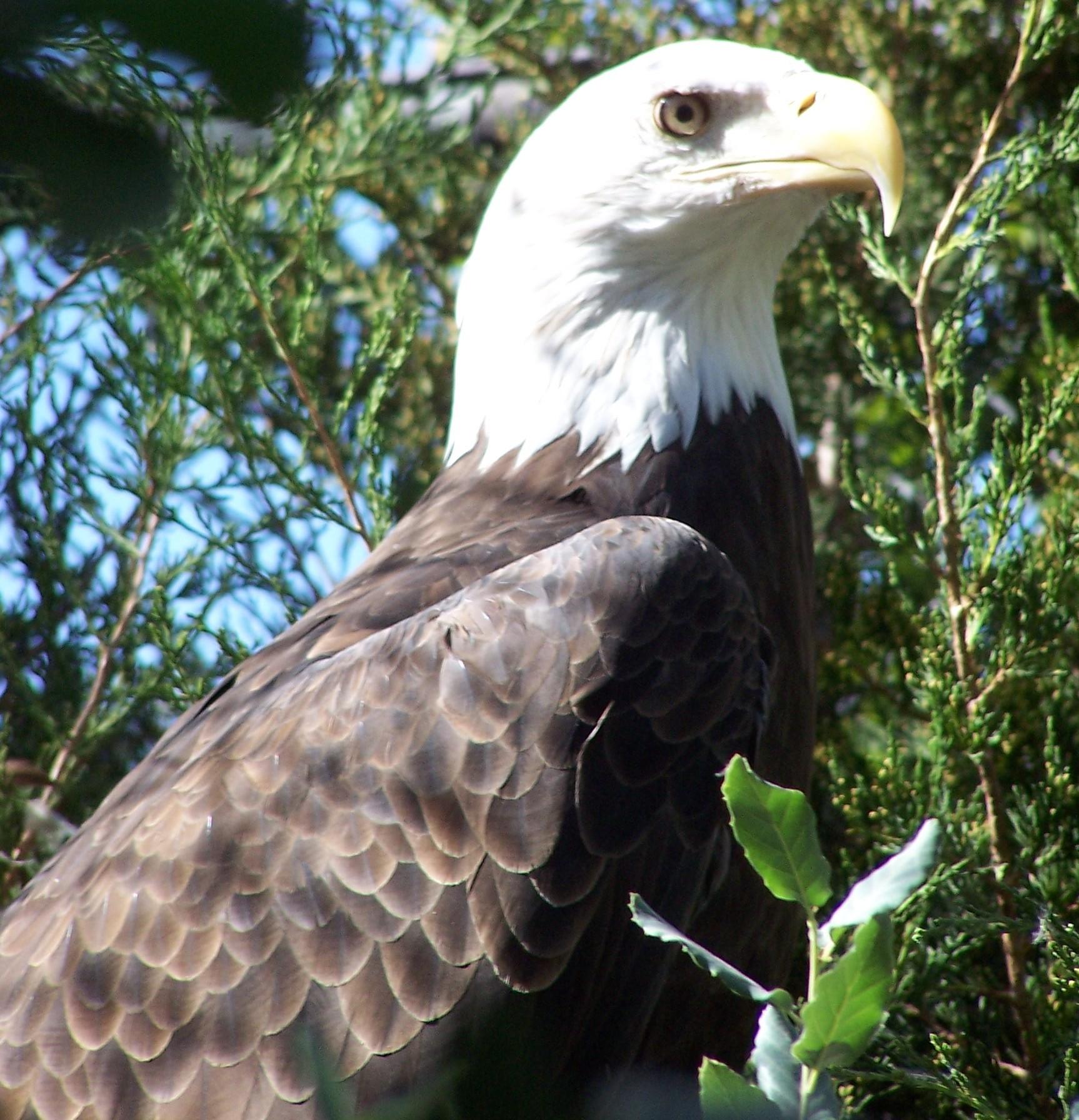 Animal Amp Conservation Micke Grove Zoo San Joaquin County