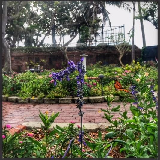 Miami house tours, MiamiCurated, Key west garden tours