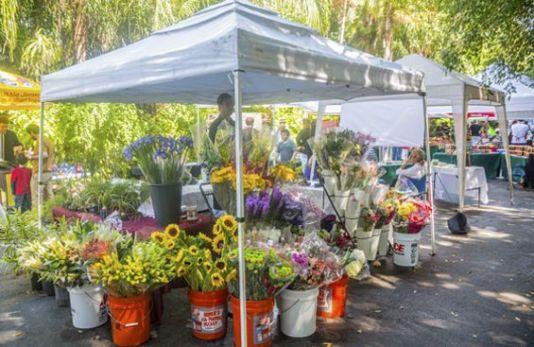farmers market pinecrest, miami farmers markets, miamicurated