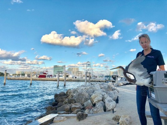 sunset cruises miami, things to do in nature miami, MiamiCurated